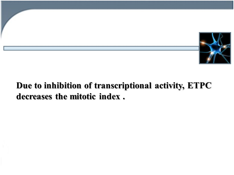 Due to inhibition of transcriptional activity, ETPC decreases the mitotic index.