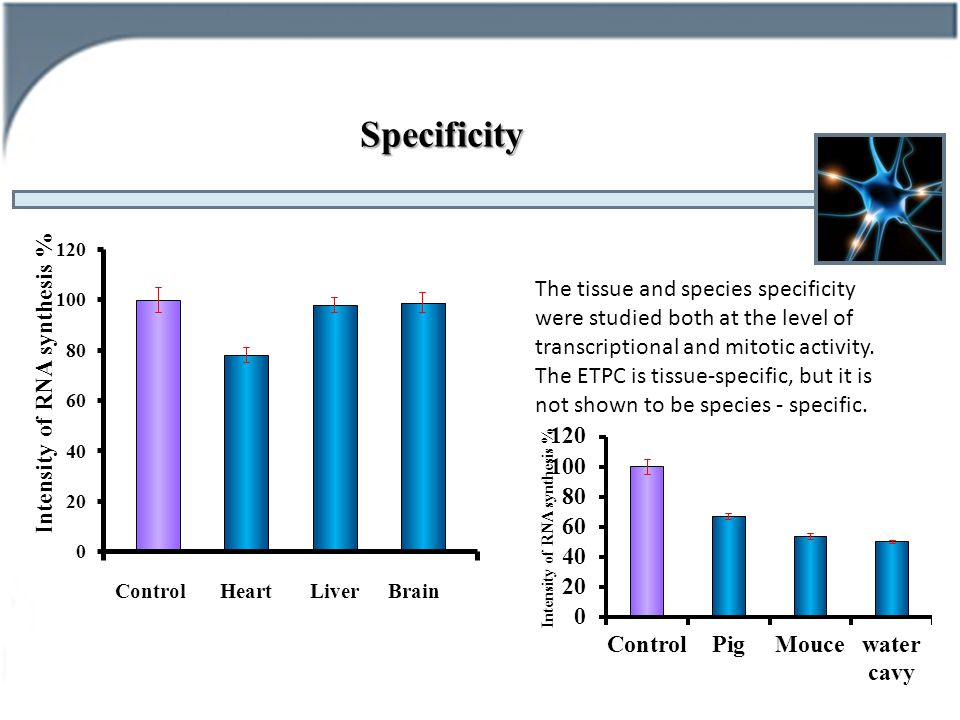 Specificity ControlHeartLiverBrain The tissue and species specificity were studied both at the level of transcriptional and mitotic activity.