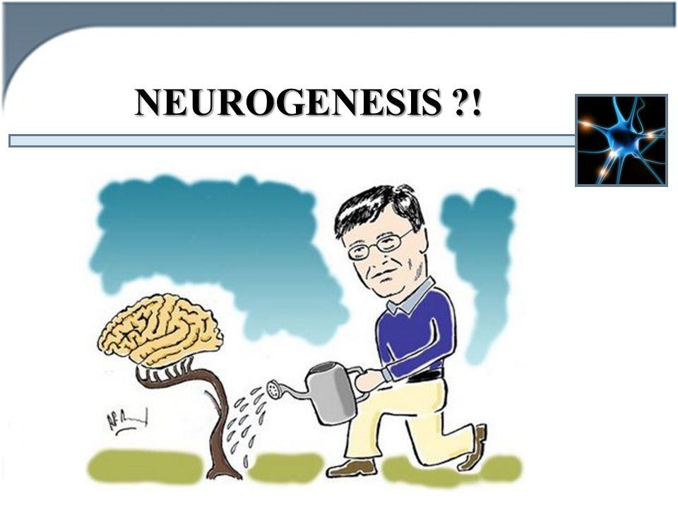 NEUROGENESIS !