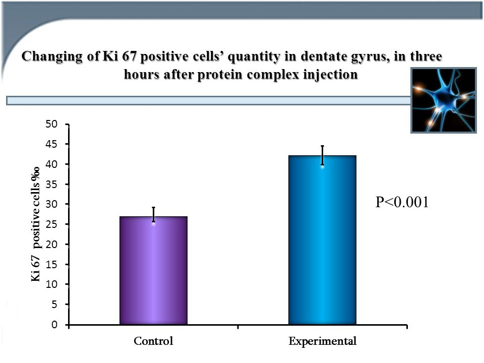 Changing of Ki 67 positive cells' quantity in dentate gyrus, in three hours after protein complex injection P<0.001