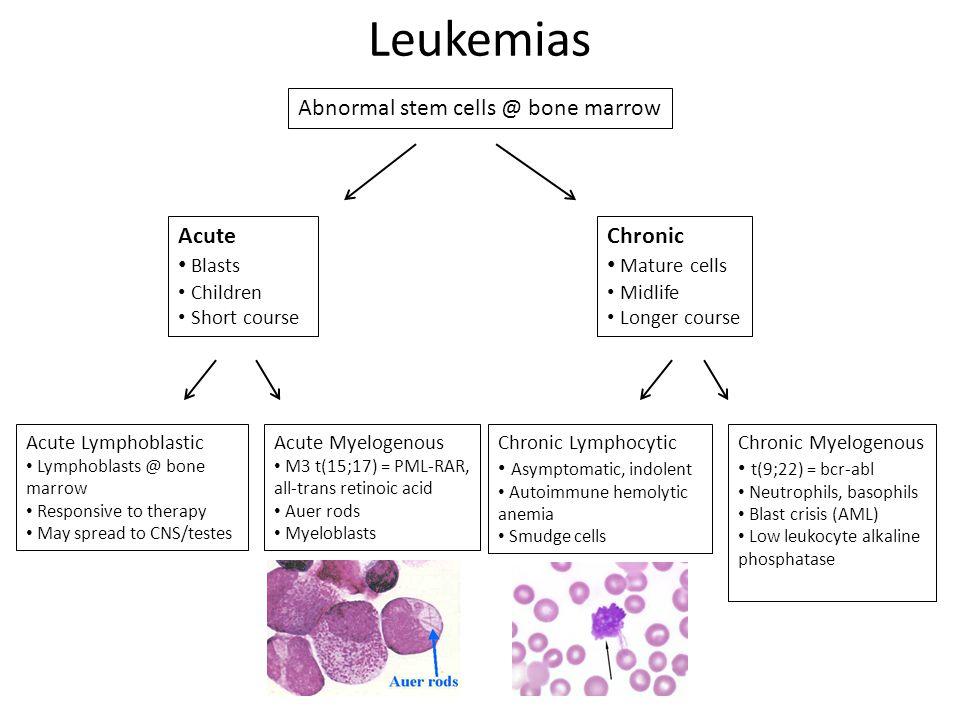 Leukemias Abnormal stem cells @ bone marrow Acute Blasts Children Short course Chronic Mature cells Midlife Longer course Acute Lymphoblastic Lymphoblasts @ bone marrow Responsive to therapy May spread to CNS/testes Acute Myelogenous M3 t(15;17) = PML-RAR, all-trans retinoic acid Auer rods Myeloblasts Chronic Lymphocytic Asymptomatic, indolent Autoimmune hemolytic anemia Smudge cells Chronic Myelogenous t(9;22) = bcr-abl Neutrophils, basophils Blast crisis (AML) Low leukocyte alkaline phosphatase