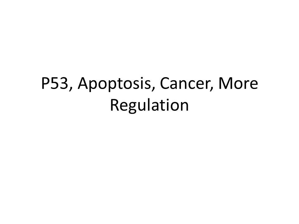 P53, Apoptosis, Cancer, More Regulation