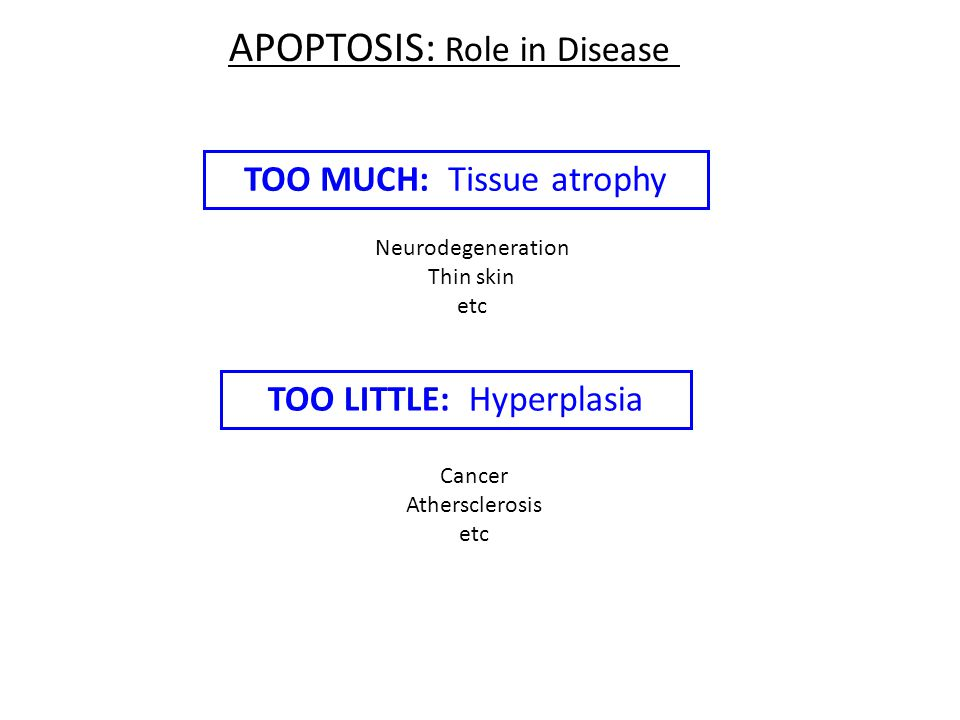 STAGES OF CLASSIC APOPTOSIS Healthy cell DEATH SIGNAL (extrinsic or intrinsic) Commitment to die (reversible) EXECUTION (irreversible) Dead cell (condensed, crosslinked) ENGULFMENT (macrophages, neighboring cells) DEGRADATION