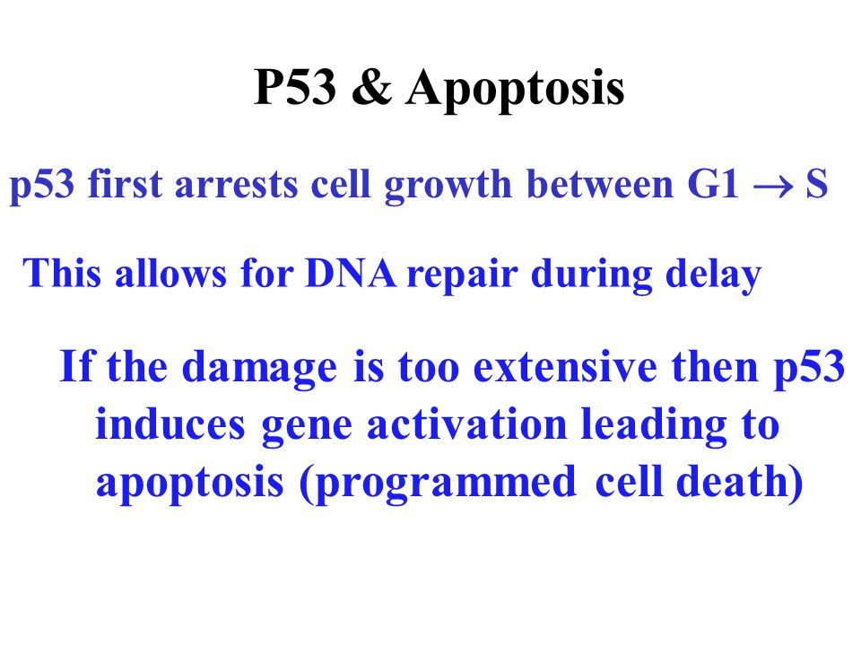 OPTIMAL FUNCTION (HEALTH) APOPTOSIS AGING Neurodegeneration, cancer, …..