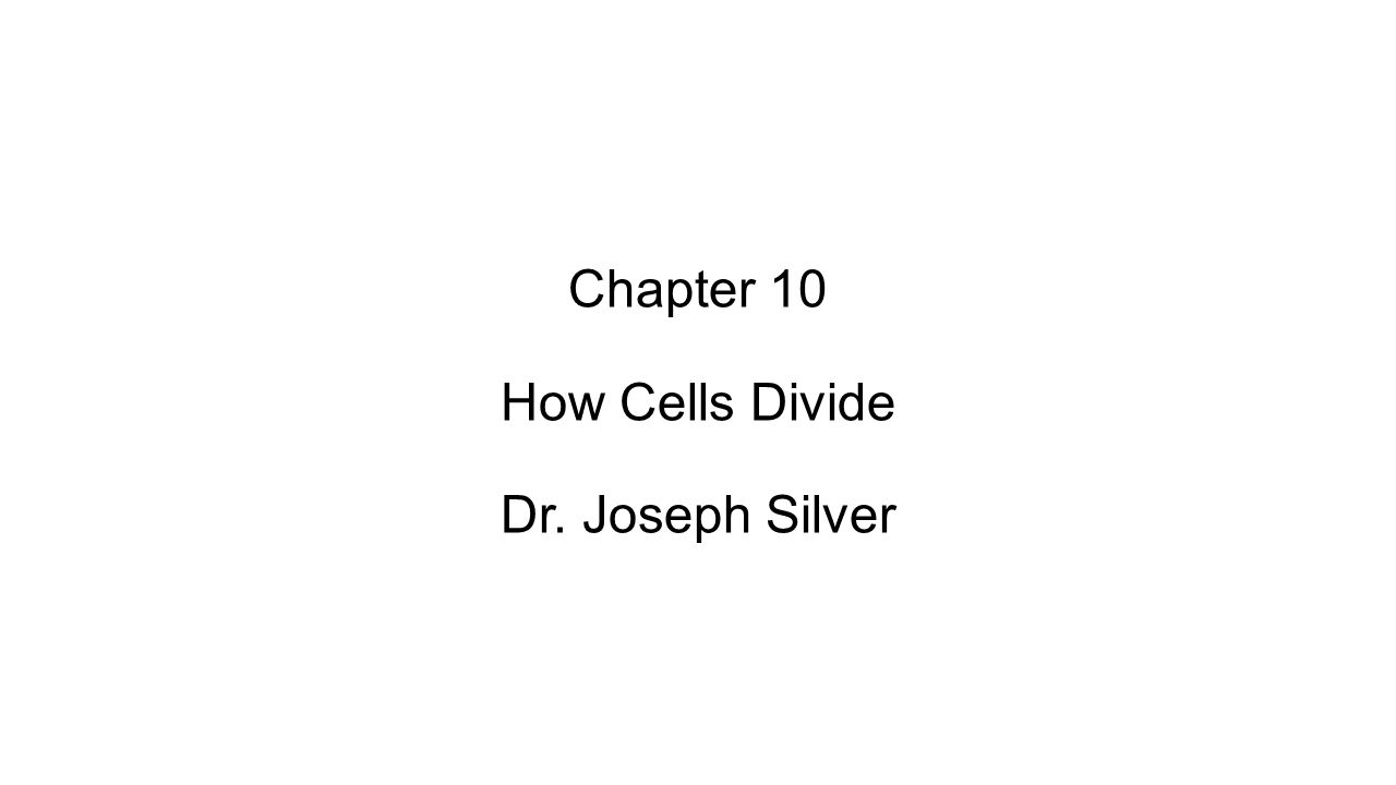 Chapter 10 How Cells Divide Dr. Joseph Silver