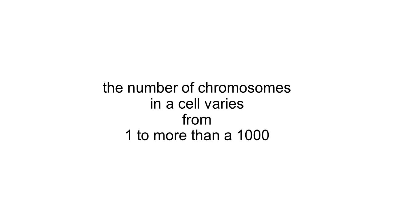 the number of chromosomes in a cell varies from 1 to more than a 1000