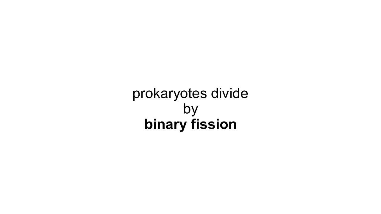 prokaryotes divide by binary fission