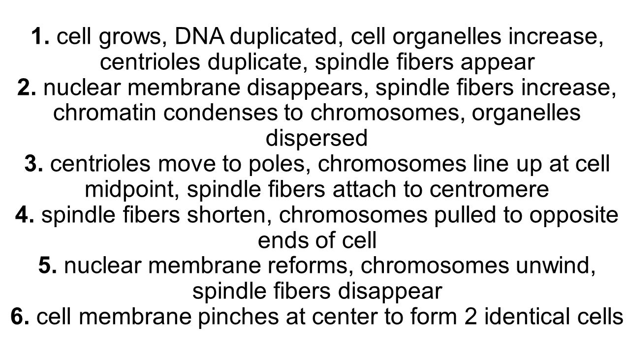1. cell grows, DNA duplicated, cell organelles increase, centrioles duplicate, spindle fibers appear 2. nuclear membrane disappears, spindle fibers in