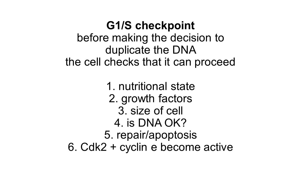 G1/S checkpoint before making the decision to duplicate the DNA the cell checks that it can proceed 1. nutritional state 2. growth factors 3. size of