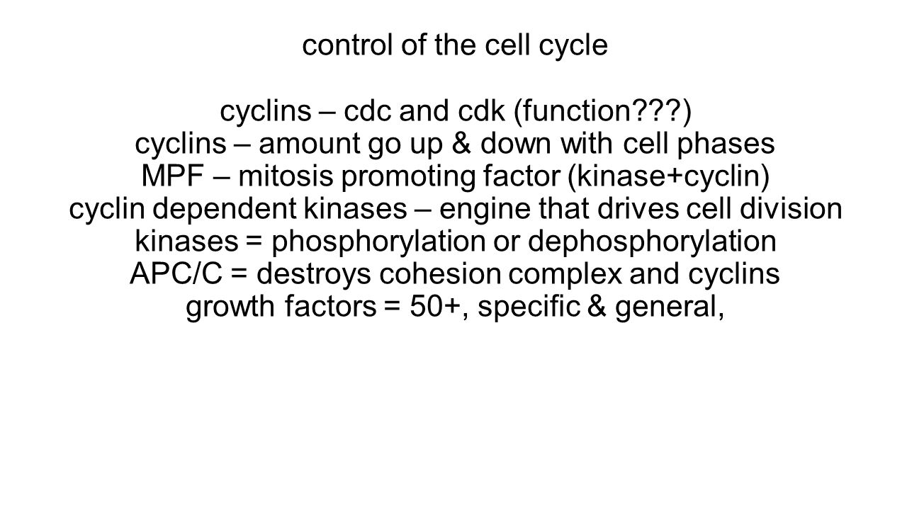 control of the cell cycle cyclins – cdc and cdk (function???) cyclins – amount go up & down with cell phases MPF – mitosis promoting factor (kinase+cy