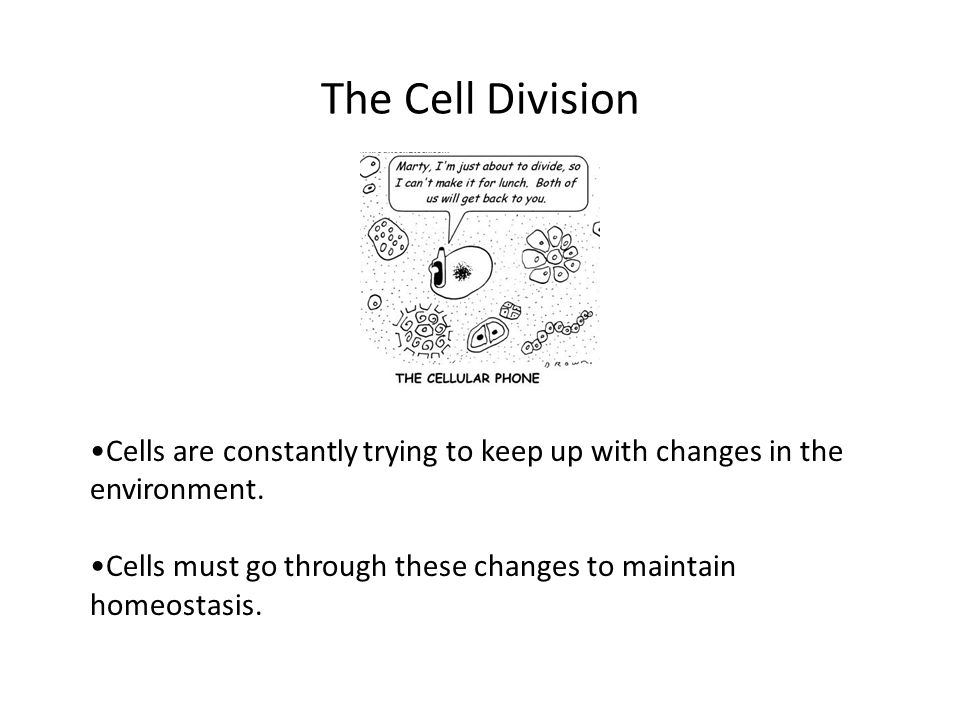 The Cell Division Cells are constantly trying to keep up with changes in the environment.