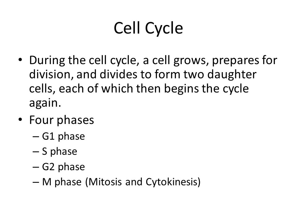 Cell Cycle During the cell cycle, a cell grows, prepares for division, and divides to form two daughter cells, each of which then begins the cycle aga
