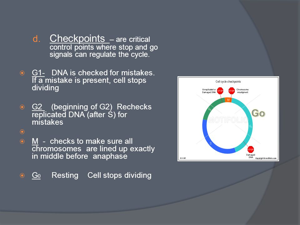 d. Checkpoints – are critical control points where stop and go signals can regulate the cycle.  G1- DNA is checked for mistakes. If a mistake is pres