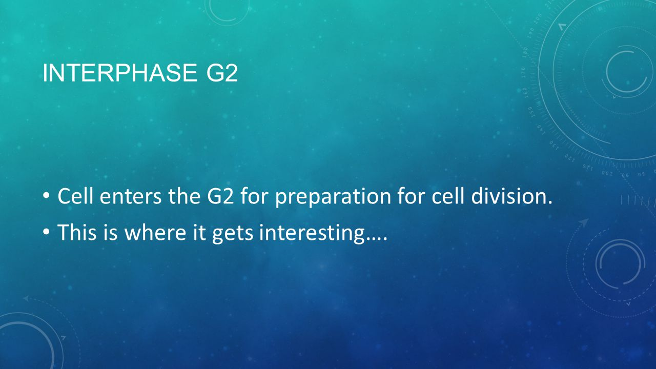 INTERPHASE G2 Cell enters the G2 for preparation for cell division.