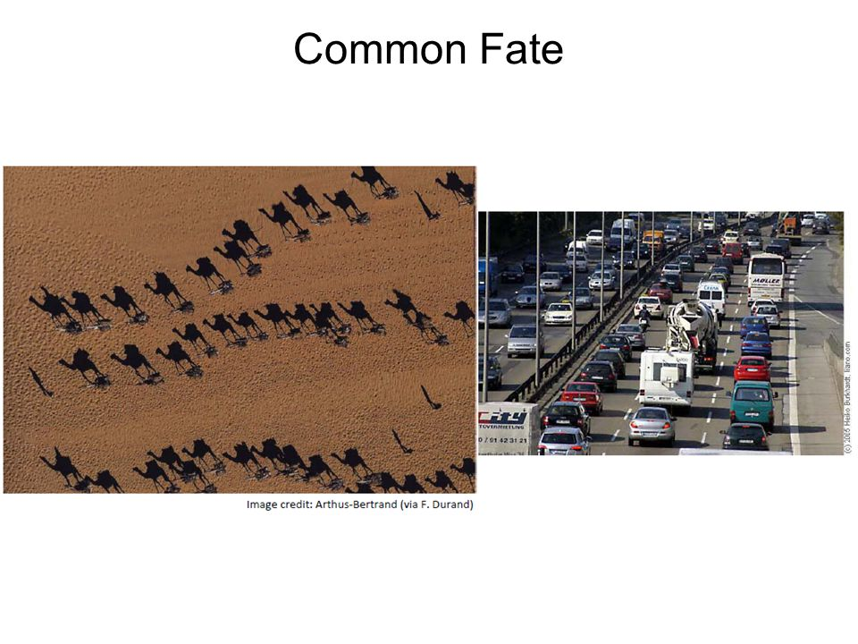 Common Fate
