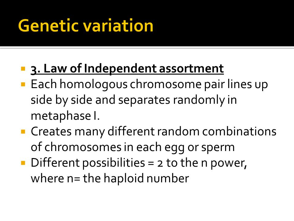  3. Law of Independent assortment  Each homologous chromosome pair lines up side by side and separates randomly in metaphase I.  Creates many diffe