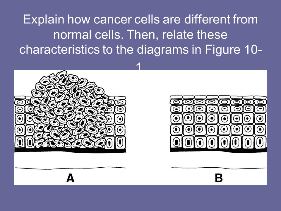 Explain how cancer cells are different from normal cells. Then, relate these characteristics to the diagrams in Figure 10- 1.