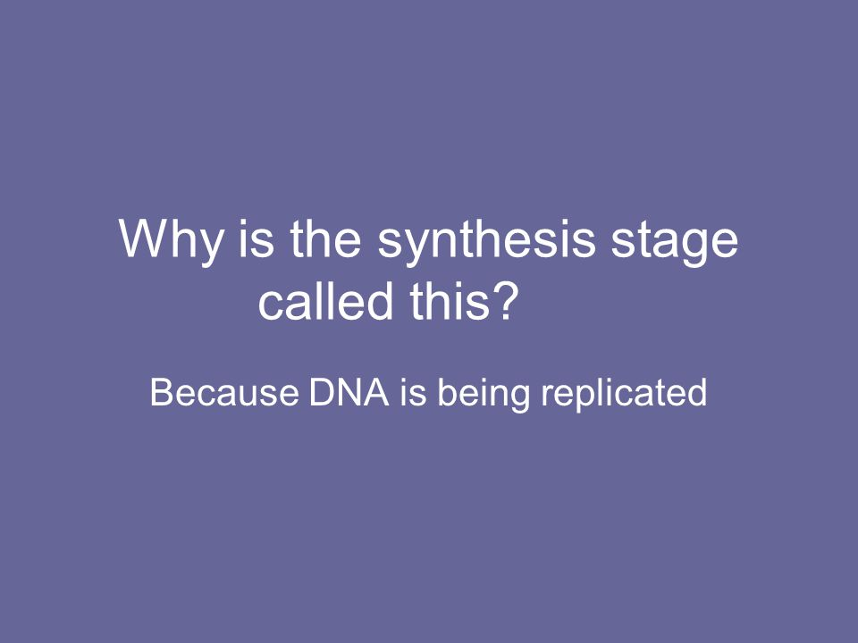 Why is the synthesis stage called this? Because DNA is being replicated