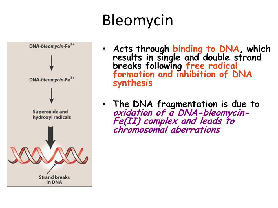 Bleomycin Acts through binding to DNA, which results in single and double strand breaks following free radical formation and inhibition of DNA synthes