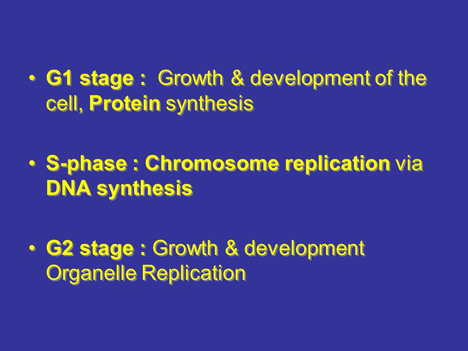 G1 stage : Growth & development of the cell, Protein synthesis S-phase : Chromosome replication via DNA synthesis G2 stage : Growth & development Organelle Replication G1 stage : Growth & development of the cell, Protein synthesis S-phase : Chromosome replication via DNA synthesis G2 stage : Growth & development Organelle Replication