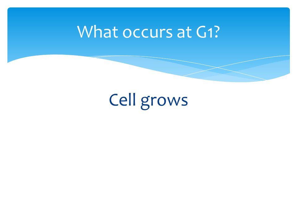 Cell grows What occurs at G1?