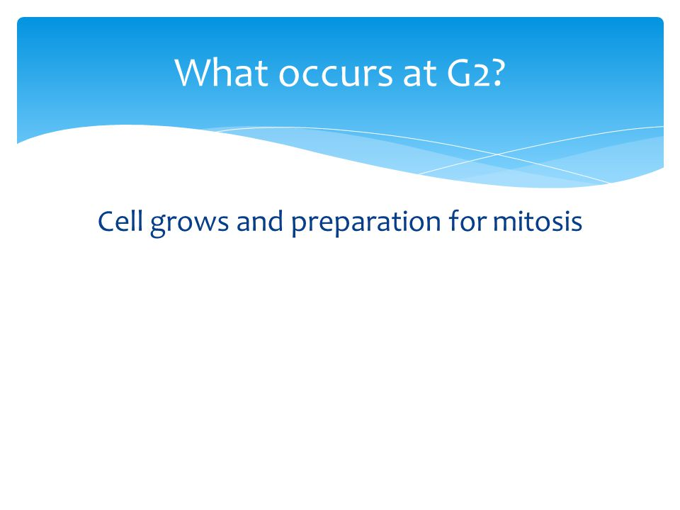 Cell grows and preparation for mitosis What occurs at G2?