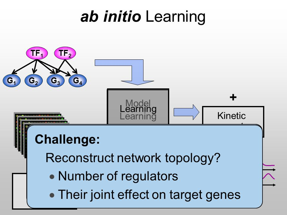 Model Learning ab initio Learning Transcription rates Learning Expression data mRNA decay rates Kinetic parameters G4G4 TF 2 TF 1 G3G3 G2G2 G1G1 TF 2 + Big assumption: u Network topology is given u Unrealistic, even for well understood systems + Challenge: Reconstruct network topology.