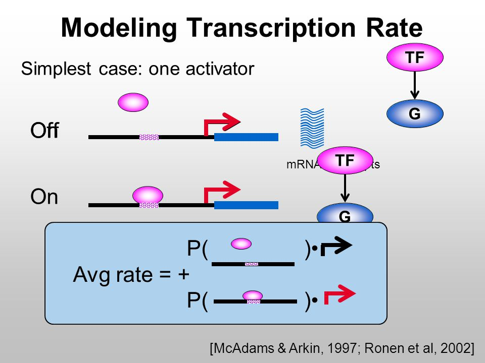 OnOff Modeling Transcription Rate Simplest case: one activator G TF mRNA transcripts G TF On [McAdams & Arkin, 1997; Ronen et al, 2002] P( ) Avg rate = + P( )