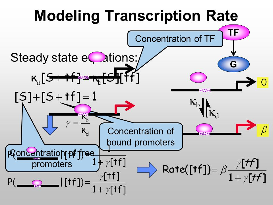 Modeling Transcription Rate Steady state equations: G TF Concentration of free promoters Concentration of bound promoters Concentration of TF dd bb