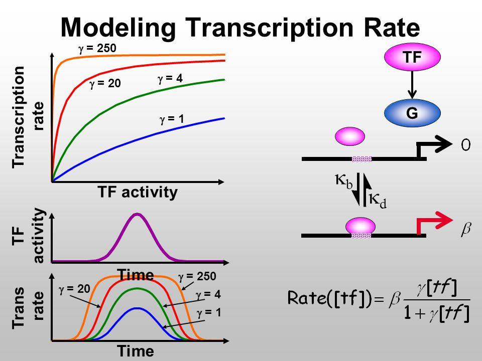 Modeling Transcription Rate G TF dd bb  = 1  = 4  = 20  = 250 TF activity Transcription rate TF activity Time  = 1  = 4  = 20  = 250 Trans rate Time