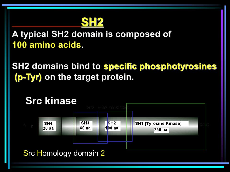 SH2 A typical SH2 domain is composed of 100 amino acids.
