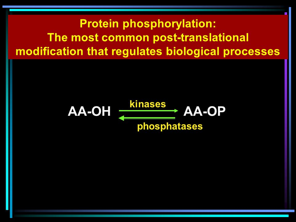 AA-OH AA-OP kinases phosphatases Protein phosphorylation: The most common post-translational modification that regulates biological processes