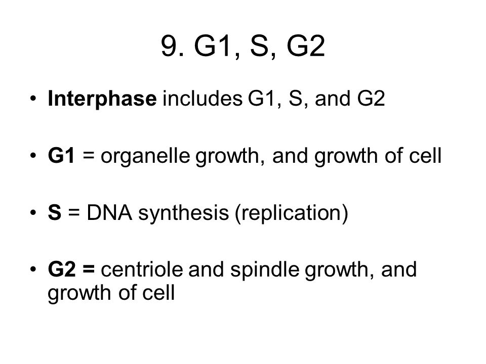 9. G1, S, G2 Interphase includes G1, S, and G2 G1 = organelle growth, and growth of cell S = DNA synthesis (replication) G2 = centriole and spindle gr