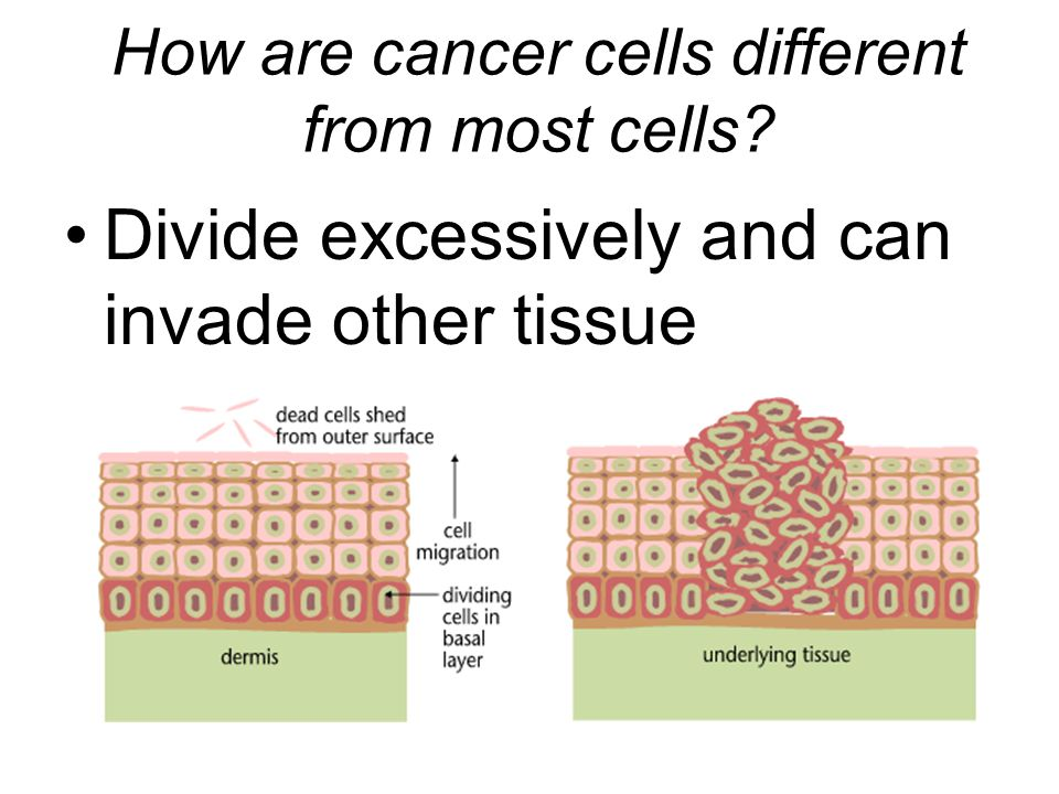 How are cancer cells different from most cells? Divide excessively and can invade other tissue