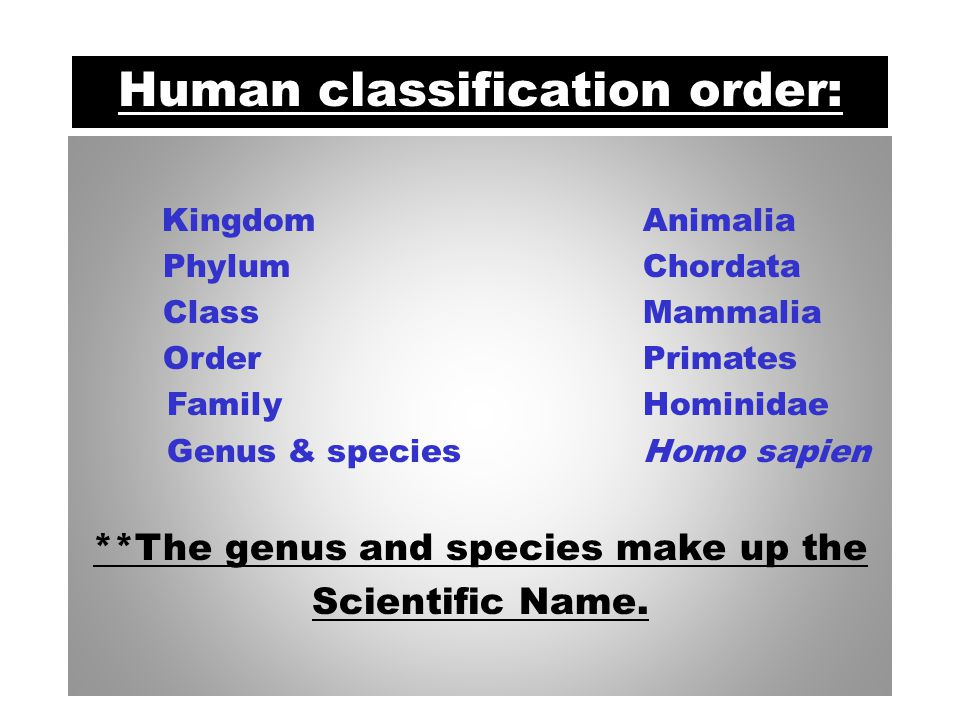 Linnaeus Classification System Kingdom Phylum Class Order Family Genus Species King Phillip Came Over From Germany on Saturday Carolus Linnaeous developed our classification system in the 1800's.