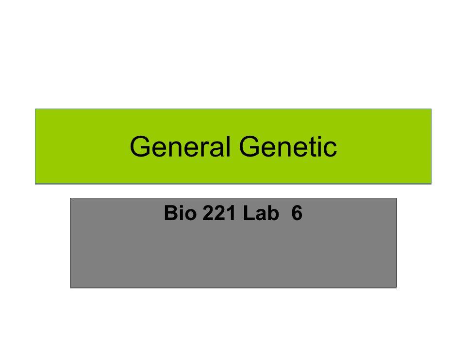 General Genetic Bio 221 Lab 6