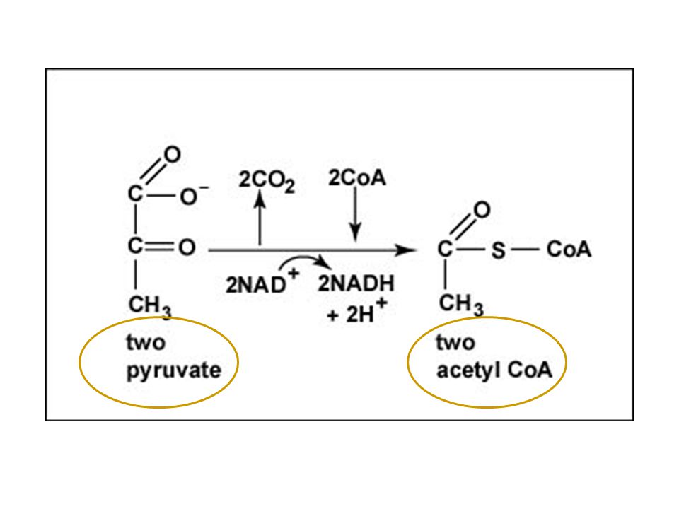 The Link Reaction or Transition Reaction (named this because it links glycolysis to the Krebs/Citric Acid cycle).