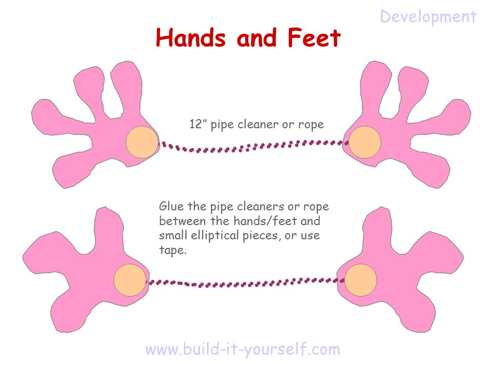 www.build-it-yourself.com Hands and Feet Glue the pipe cleaners or rope between the hands/feet and small elliptical pieces, or use tape.
