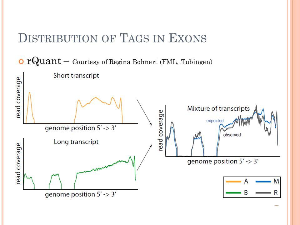 D ISTRIBUTION OF T AGS IN E XONS rQuant – Courtesy of Regina Bohnert (FML, Tubingen)