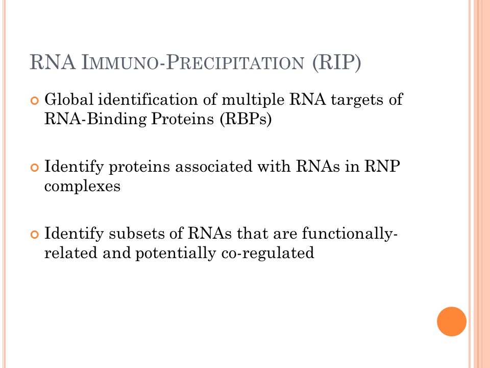 RNA I MMUNO -P RECIPITATION (RIP) Global identification of multiple RNA targets of RNA-Binding Proteins (RBPs) Identify proteins associated with RNAs in RNP complexes Identify subsets of RNAs that are functionally- related and potentially co-regulated