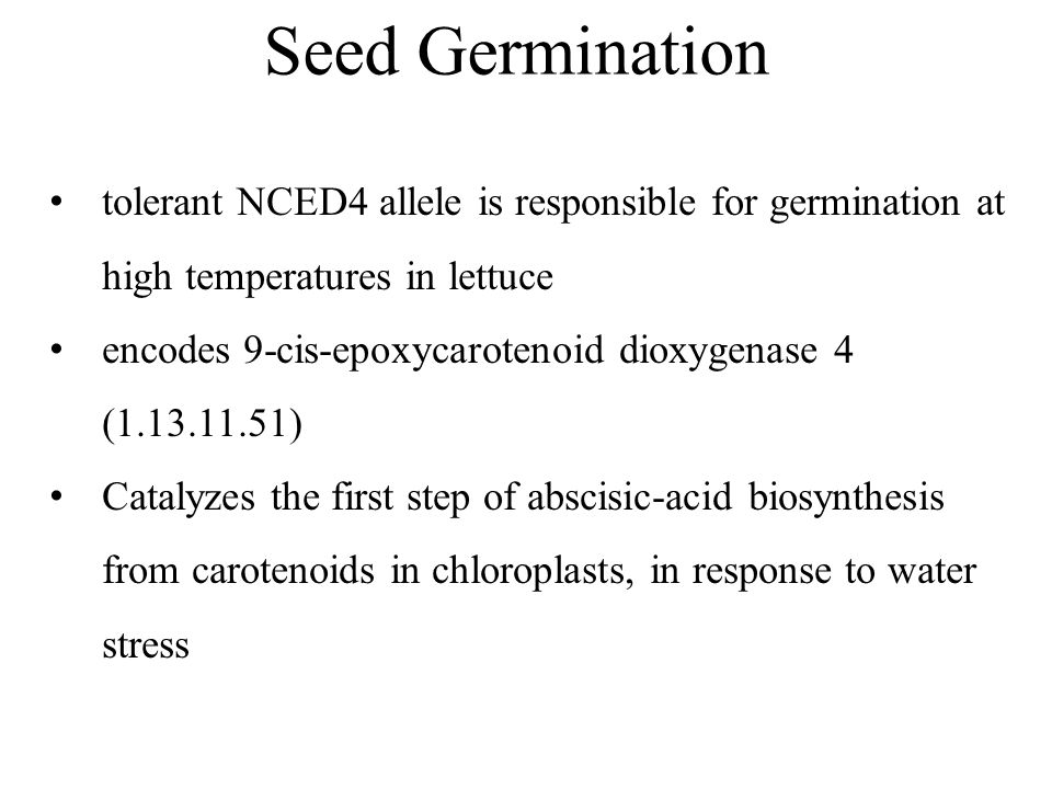 tolerant NCED4 allele is responsible for germination at high temperatures in lettuce encodes 9-cis-epoxycarotenoid dioxygenase 4 (1.13.11.51) Catalyzes the first step of abscisic-acid biosynthesis from carotenoids in chloroplasts, in response to water stress Seed Germination