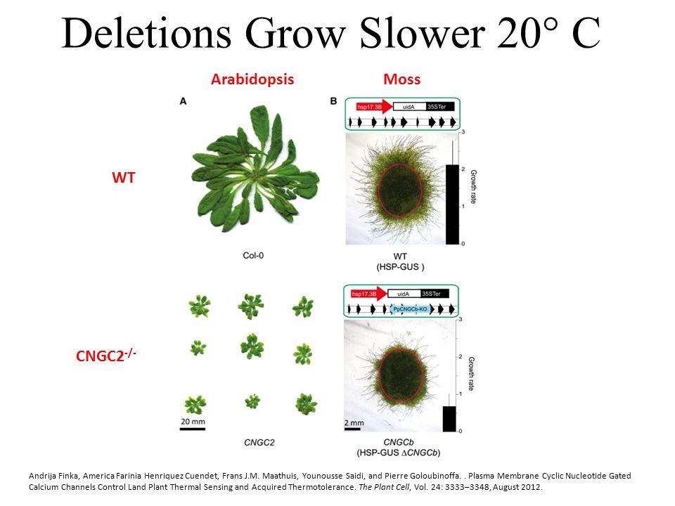 Deletions Grow Slower 20° C Andrija Finka, America Farinia Henriquez Cuendet, Frans J.M. Maathuis, Younousse Saidi, and Pierre Goloubinoffa.. Plasma M