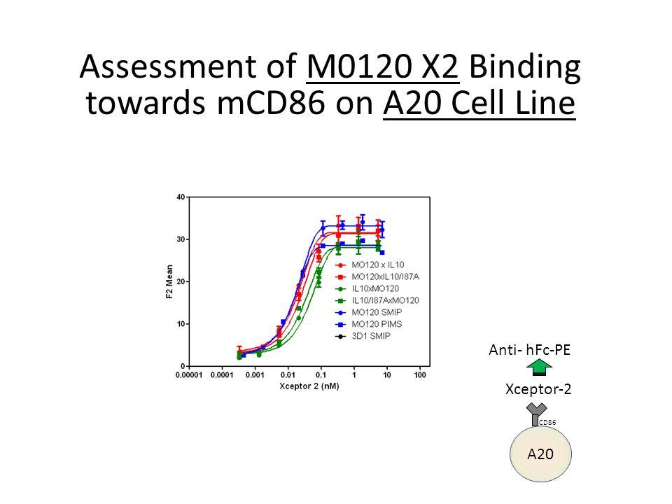 Assessment of M0115 X2 Binding towards mCD86 by ELISA hCD86-mIg Xceptor-2 Anti- hFc-HRP