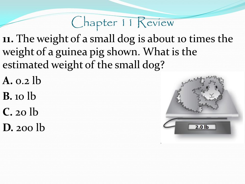 Chapter 11 Review 11. The weight of a small dog is about 10 times the weight of a guinea pig shown.