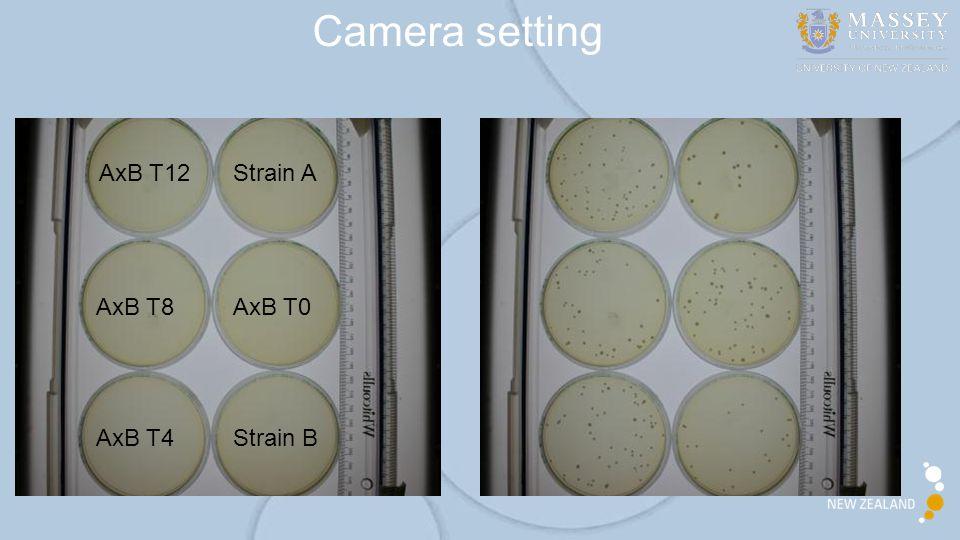 Camera setting Strain A Strain B AxB T0 AxB T4 AxB T8 AxB T12