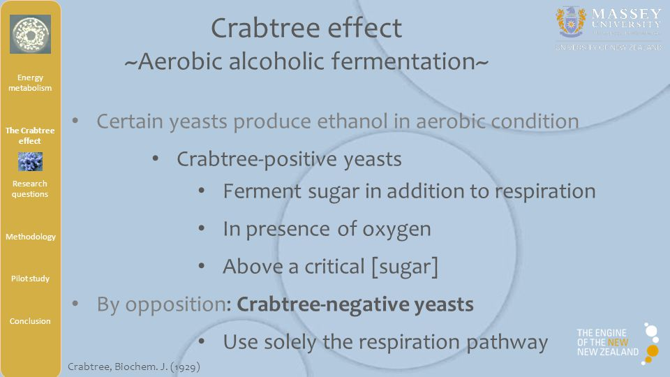 Energy metabolism The Crabtree effect Research questions Methodology Pilot study Conclusion Crabtree-positive yeasts Typical growth On batch culture Diauxic shift Two time growth Crabtree effect ~Aerobic alcoholic fermentation~ Monje-Casas, Biochem, J.