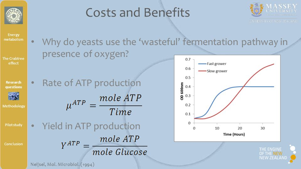 Why do yeasts use the 'wasteful' fermentation pathway in presence of oxygen.