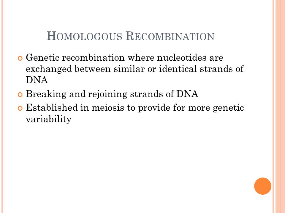 H OMOLOGOUS R ECOMBINATION Genetic recombination where nucleotides are exchanged between similar or identical strands of DNA Breaking and rejoining st