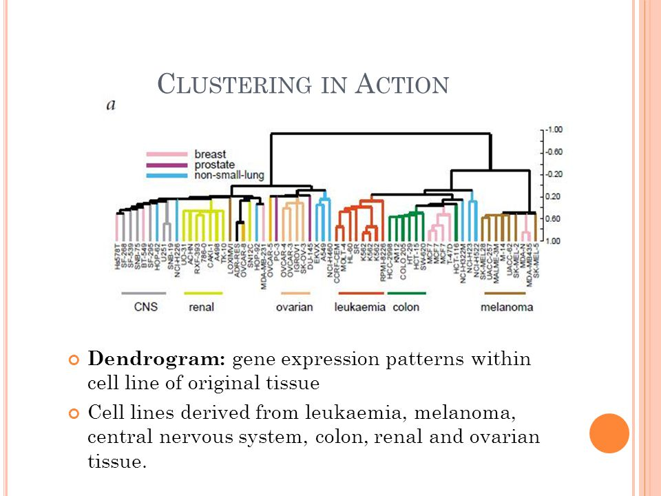 C LUSTERING IN A CTION Dendrogram: gene expression patterns within cell line of original tissue Cell lines derived from leukaemia, melanoma, central nervous system, colon, renal and ovarian tissue.