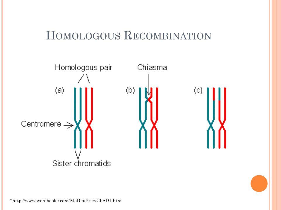 M ISALIGNMENT D URING H OMOLOGOUS R ECOMBINATION http://jeb.biologists.org/cgi/reprint/203/6/1059.pdf